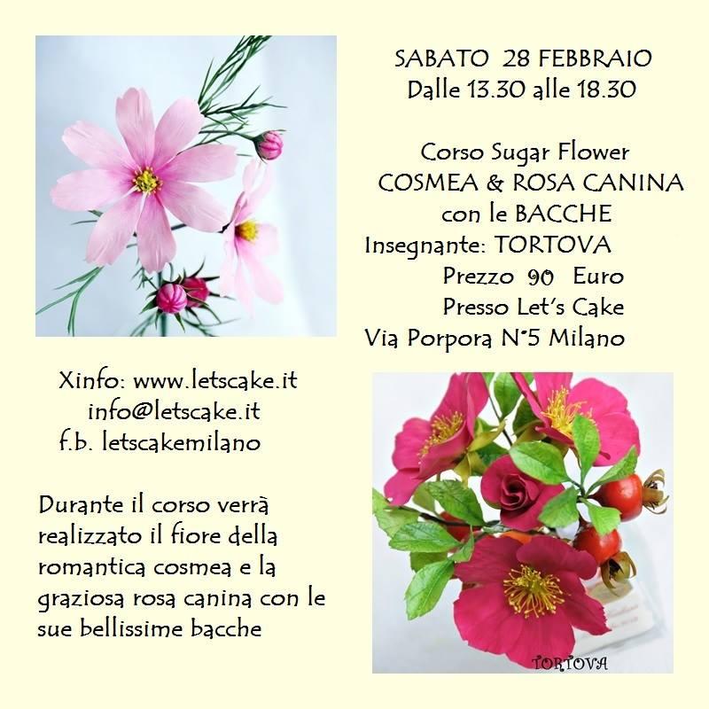 Negozio Cake Design Milano Via Porpora : - Let s Cake Milano